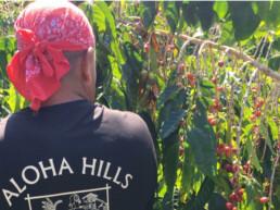 Aloha Hills Worker Tee Shirt