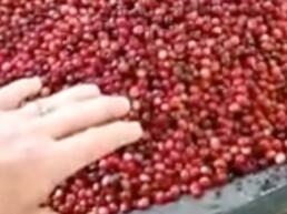 Noelani Berries