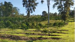 Noelani Farm