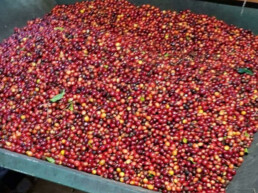 Uluwehi Berries